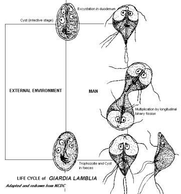 papilomele din zona intimă cum să tratezi